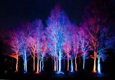 Villágíró fák