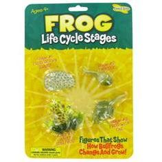 frog life cycle figures $5 at Hobby Lobby :)