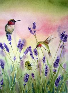 Hummingbirds and lavender, watercolor by Tivoli Gardens