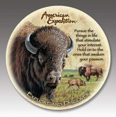 American Bison Stone Coaster Set For $19.99