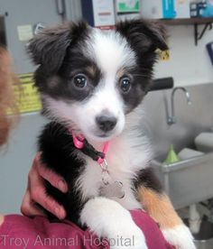 Photo: Sadie would like to welcome you to our midweek puppy pick-me-up.