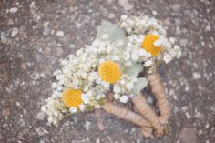 vintage country rustic southern wedding julie paisley photography billy balls billy buttons babys breath boutineers diy boutineers
