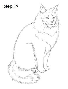 Maine Coon Cat Drawing 19
