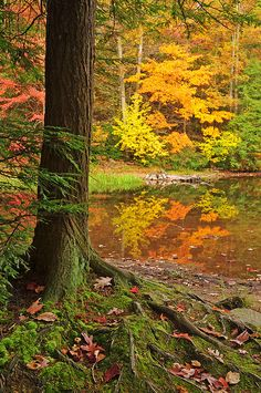 Roots by Nature's Gift Photography, via Flickr; Locust Lake State Park, Pennsylvania