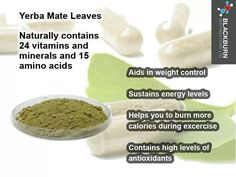 Yerba mate: an excellent substitute for coffee with more health benefits than green tea Green Tea Vs Coffee, Mate Tee, Tea Benefits, Health Benefits, Yerba Mate Tea, Expensive Coffee, Matcha Green Tea Powder, Food Facts, Healthy Fats