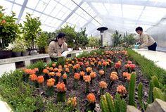 아름다운 꽃풍경이 펼쳐진 국제친선식물관3