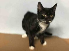 LITTLEFOOT - A1118102 - - Manhattan  *** TO BE DESTROYED 07/14/17 *** 3 month old Littlefoot has a URI and conjunctivitis and also tested positive for ringworm.  Needs rescue asap!! Friendly purring kitten! -  Click for info & Current Status: http://nyccats.urgentpodr.org/littlefoot-a1118102/