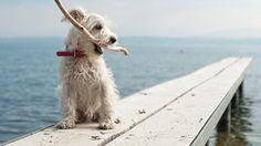 such a cute doggie!