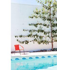 pool. tree.