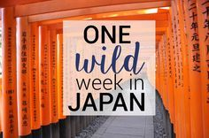 One Wild Week in Japan: A Complete Itinerary - Japan is a country filled with contrasts between modern society and ancient traditions. We spent an action-packed 8 days traveling and experiencing this peaceful, yet chaotic country. The itinerary below is a perfect guide for anyone visiting Japan for the first time.