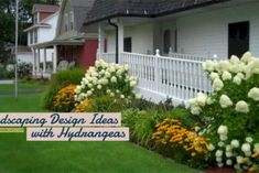 Adorable Landscaping Design Ideas with Hydrangeas