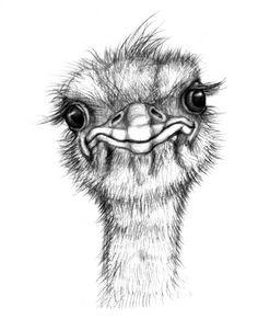 55-ostrich-2-of-3