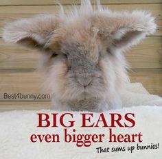 Big ears, even bigger hearts! That sums up bunnies! www.best4bunny.com