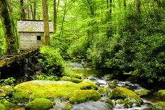 Flume and cabin on a creek in the Great Smoky Mountains