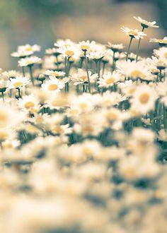 the friendliest flowers.