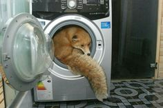 Cute fox in a washing machine Animals And Pets, Funny Animals, Cute Animals, Animal Pictures, Funny Pictures, Funny Pics, Mr Fox, Cat Dog, Fox Art