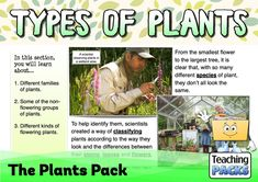 Discover the wonderful world of plants with our fantastic collection of teaching, activity and classroom display resources. Includes a child-friendly guide to plant growth, pollination, photosynthesis, classification, adaptation and much more! Science Curriculum, Science Resources, Activities, Classifying Plants, Child Friendly, Plant Growth, Classroom Displays, Photosynthesis, Types Of Plants
