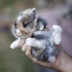 I want this baby!! ᘡղbᘠ