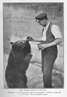 The 'real' Winnie the Pooh and her keeper at London Zoo - 'The Tamest Bear' who lets children ride her, and she loves her golden syrup. Animal Pictures, Cool Pictures, House At Pooh Corner, Bear Photos, Christopher Robin, Vintage Teddy Bears, Golden Syrup, Racoon, Pooh Bear