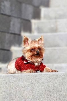 8d66f179df0811 No.2 A stylish Dog.