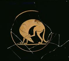 Attic red-figure cup, detail of a Laconian hound scratching his head, by the Euergides Painter, c.500 BC (ceramic)