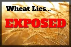 Are You High On Bread - Wheat Lies Exposed