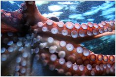 October 8th is World Octopus Day! Find out more information at https://www.checkiday.com.
