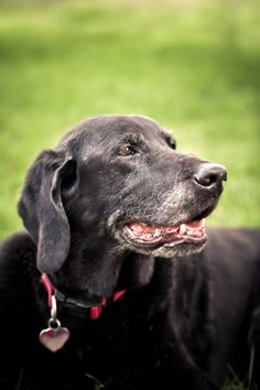 7 Benefits of Adopting a Senior Pet