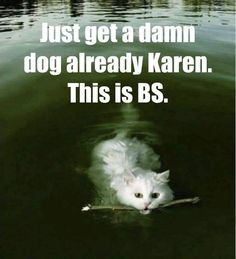 Post with 31 votes and 1430 views. Tagged with cats, bullshit, karen; Funny Animals With Captions, Cute Animal Memes, Animal Jokes, Funny Animal Pictures, Animal Pics, Funny Cat Captions, Animal Humour, Animal Fun, Funny Shit