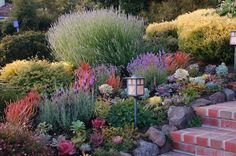 Pretty & colorful mix of succulents and drought tollerant plants. Xeriscape. Dryscape.