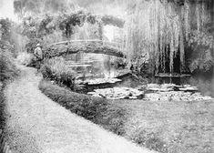 Claude Monet  w swoim ogrodzie, private Collection / Roger-Viollet, Paris/ The Bridgeman Art Library