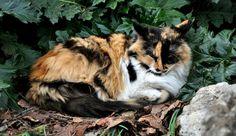 Le chat du jardin des plantes de Montpellier