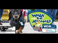 There are many reasons why people walk in our annual charity event. Here is Why We Walk