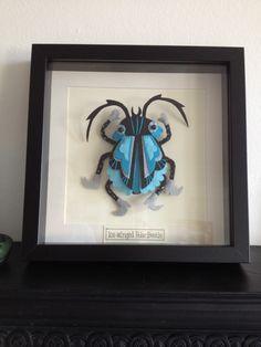 Felt Mistress Beetle