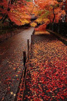 Autumn in Komyo-ji Temple, Nagaokakyo, Kyoto, Japan. I LOVE Kyoto! Seasons Of The Year, Best Seasons, Autumn Scenes, Autumn Aesthetic, All Nature, Fall Pictures, Fall Pics, Belle Photo, Fall Halloween