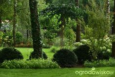 Ogród pod lasem - strona 309 - Forum ogrodnicze - Ogrodowisko