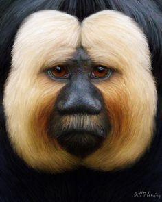 Saki Monkey by KomodoEmpire on DeviantArt