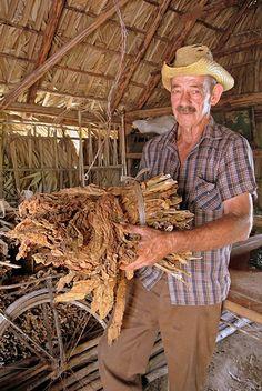 Third generation tobacco farmer . Valle de Viñales Cuba