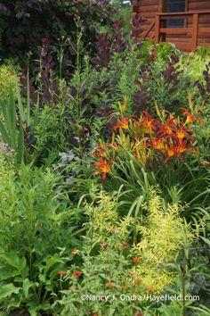 'Nona's Garnet Spider' daylily (Hemerocallis) with 'Red Spider' zinnia (Zinnia tenuifolia), Mellow Yellow spirea (Spiraea thunbergii 'Ogon'), and 'Royal Purple' smoke bush (Cotinus coggygria)