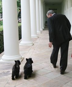 Scotties Barney and Miss Beazley follow George W. Bush along the West Wing Colonnade.