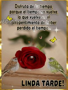 Happy Birthday Fun, Good Afternoon, Belem, Thoughts, Quotes, Happy Wednesday, Sad, Good Evening Messages, Quotations