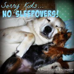 A Productive Endeavor: Sorry Kids... No sleepovers