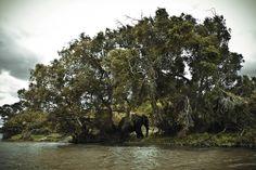 Zambia Photo Project by Guilherme Amorim, via Behance
