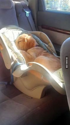 Child seat still comes in handy