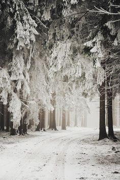 Find images and videos about nature, winter and snow on We Heart It - the app to get lost in what you love. Winter Szenen, Winter Love, Winter Magic, Winter Christmas, Country Christmas, Winter Walk, Winter White, Winter Running, Winter Storm