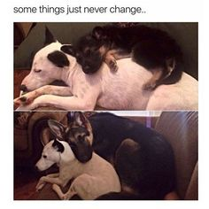Animal Pictures with Captions that will Make You Smile - 15