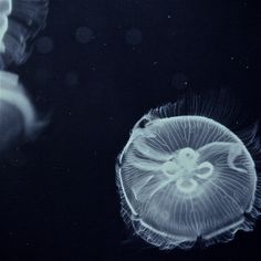 jellyfish fish floating in black and white. photo by Aron Gangbar