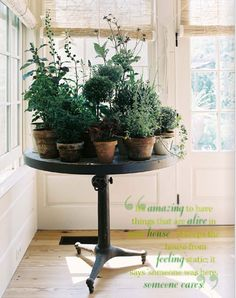 Inside Herb Table: Love the table of Herbs inside; From Lonny Magazine