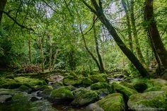 Kilfane Glen, Kilkenny, Ireland