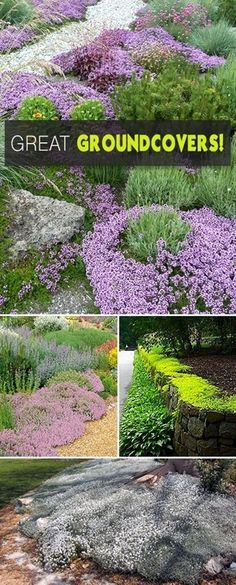 There are groundcovers for hot, dry sites, ground covers for shade, poor soil and areas that are always wet. Groundcovers just need to spread well over a larger area than the average plant and cover…MoreMore #GardenIdeas